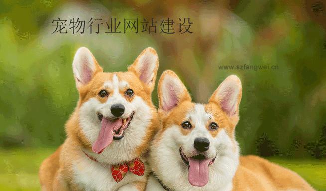 宠物行业网站建设